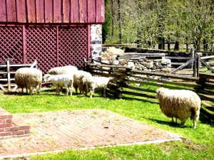 Sheep at Greenbank Mill